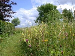 B106 Dotter Koekoeksbloemmengsel Biodivers Natuurzaden Oudewater