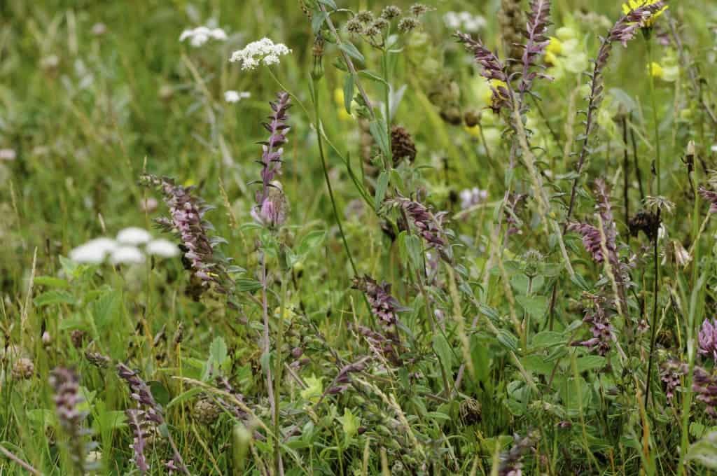 Overige mengselsBiodivers-inheemse-wilde-plantenzaden-Oudewater