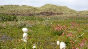 duinen-gras-bloemen