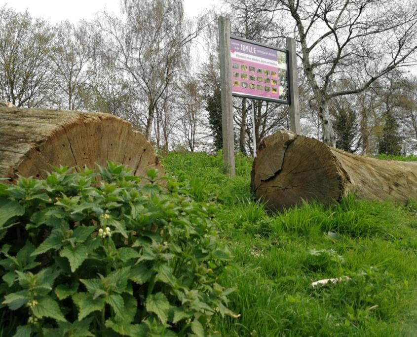 boomstam-gras-bord-bomen-plant