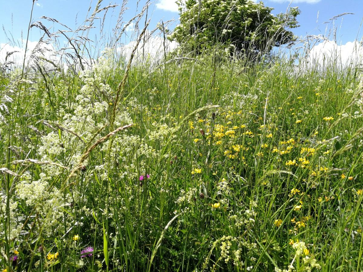 gradijkvegetaie met natuurlijke grassen