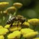 Bijenmengsels