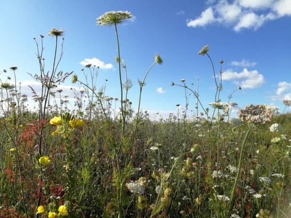 wilde planten bloemen landschapsvehetatie