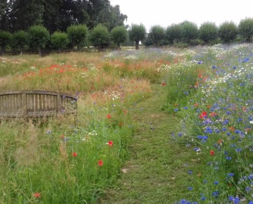 bloemenweide; wilde planten; inheems; Biodivers Oudewater