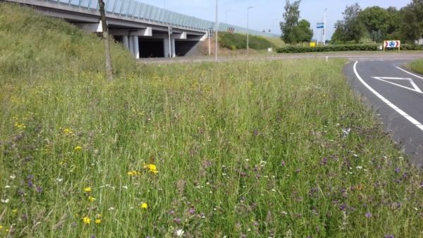 gras-bloemen-weg-helling-viaduct-verkeersbord-wegbelijning=berm-wilde planten-bloei-geel-paars