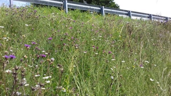 vangrail-gras-bloemen-boom-paars-wit