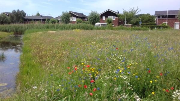 huizen-gras-bloemen-weide-rood0geel-wit-struiken-bomen