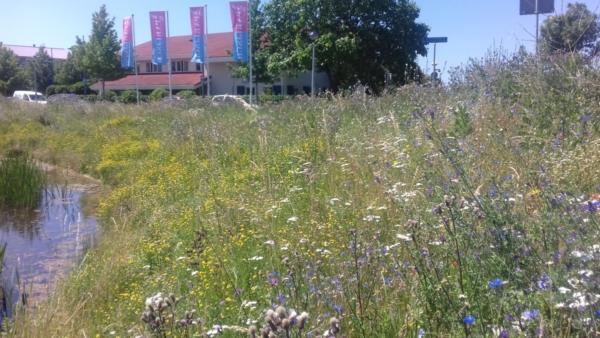 huizen-vlaggen-gras-weide-bloemen-bomen
