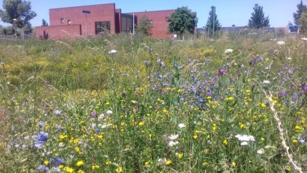 gebouw-gras-bloemen-bomen-weide-paars-geel-wit